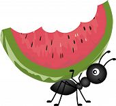 stock photo of watermelon  - Scalable vectorial image representing a ant carrying watermelon - JPG