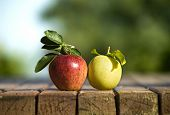 Two color apples kissing each other on an old table