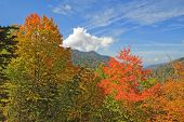 picture of gatlinburg  - Autumn leaves starting to turn in Great Smoky Mountains National Park against a bright blue sky and white clouds - JPG