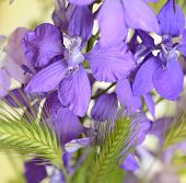 Purple Flowers Of Delphinium