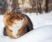 Cat On Sits On Snow