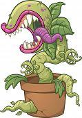 picture of carnivorous plants  - Carnivorous plant - JPG