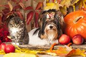 pic of coon dog  - cat and dog - JPG
