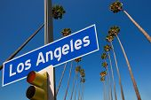 image of washingtonia  - LA Los Angeles palm trees in a row typical California with road sign photo mount - JPG