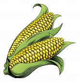 foto of maize  - A sweet corn maize vintage woodcut illustration in a vintage style - JPG