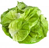 Fresh Lettuce Salad Leaves in Plate Isolated On White Background