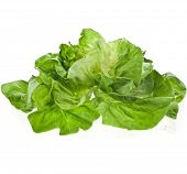 Lettuce Salad Isolated On White Background