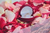 pic of jewel-case  - image of wedding rings in a gift box on flowers background - JPG