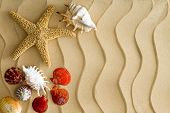 stock photo of conch  - Starfish and sea shells on the wavy bech sand with copy space on the right side - JPG