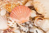 pile of seashells