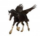 Winged stallion (Pegasus) galloping