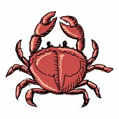 image of cooked crab  - hand drawn sketch cartoon illustration of crab - JPG