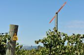 Vineyard With A Large Fan Blade And Number 75
