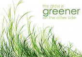 Grass is greener