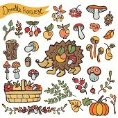 Doodle hedgehog,berries,mushrooms,fruits.Harvest