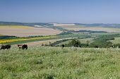 Green Fields-Beautiful Village Landscape In Northern Bulgaria