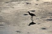 Silhouette Of Bird Stand At Wetland