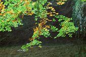 Vintage Autumn Forest