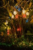 Christmas lights on a palm tree in Phuket
