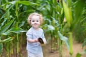 Beautiful Little Girl With Blond Curly Hair Running In A Corn Field