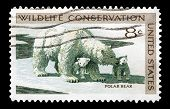 Polar Bear 1971