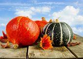 Colorful Pumpkins Against Blue Sky