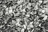 Dry Leaves Of Gray Color Lie On Earth