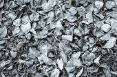 Dry Leaves Of Silvery Color Lie On Earth