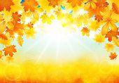 Sunny Autumn Day