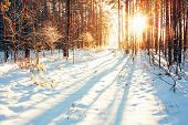 picture of sunrise  - Landscape with winter forest and bright sunbeams - JPG