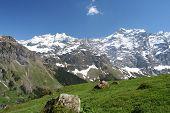 Summer Alps poster
