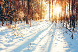 pic of snow forest  - Landscape with winter forest and bright sunbeams - JPG