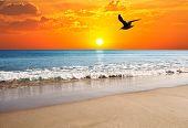 the gable and sun on the beach