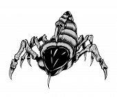 Illustration of scorpion.