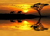 stock photo of rest-in-peace  - africa parading along the lake - JPG
