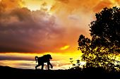 picture of wander  - a monkey wandering Africa - JPG