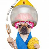 pic of hairspray  - french bulldog dog under the hood dryer with sponge shower cap and brush ready for a makeover isolated on white background - JPG