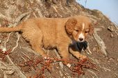 Amazing Puppy Of Nova Scotia On Nature Roots