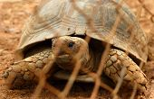 picture of tortoise  - Tortoise trapped in a cage and tortoise crawling - JPG