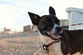 Smiling Dog, Asbury Park, NJ