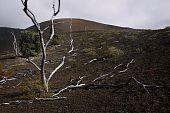 Lava Field & Trees, Big Island of Hawaii
