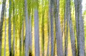 abstract blurred beech forest scene in autumn, Irati Jungle, Pyrenees, Navarra, Spain