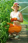 Woman Picking Tomato