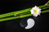 Spa Setting Of White Frangipani Flower, Symbol Yin Yang  And Natural Bamboo On Zen Basalt Stones Wit