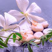 Fantastic Spa Concept Of Delicate White Hibiscus, Twig Passionflower And Stones On Background With D