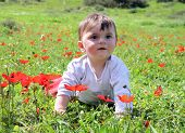 Baby Sits In A Meadow