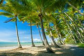 picture of palm  - Palm trees on the beach of Palm Cove in Australia - JPG