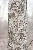 Carvings On Tree Trunk