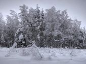 Winter in forest.