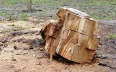 Urban deforestation